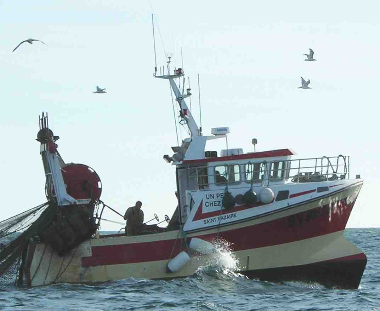 Quelles graines sont rigides pour la pêche en mer?