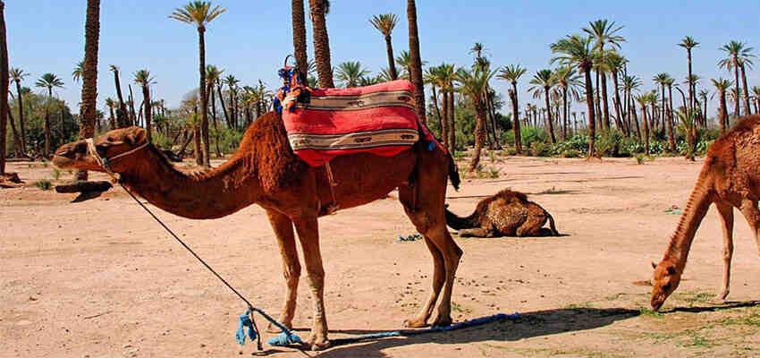 Où prenez-vous le bateau pour aller au Maroc?